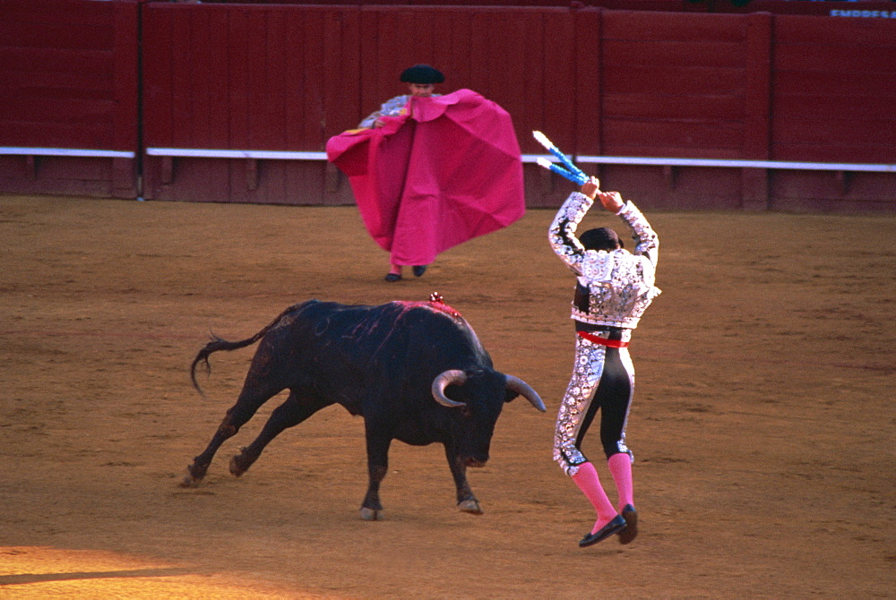 The banderillas sticks are placed in the bull's neck, bullfighting, Spain, Europe - 574-944