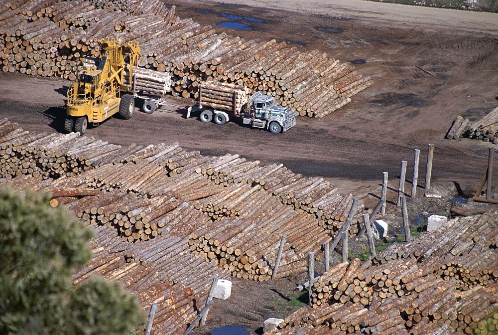 Logging plant at port, Gisborne, East Coast, North Island, New Zealand, Pacific