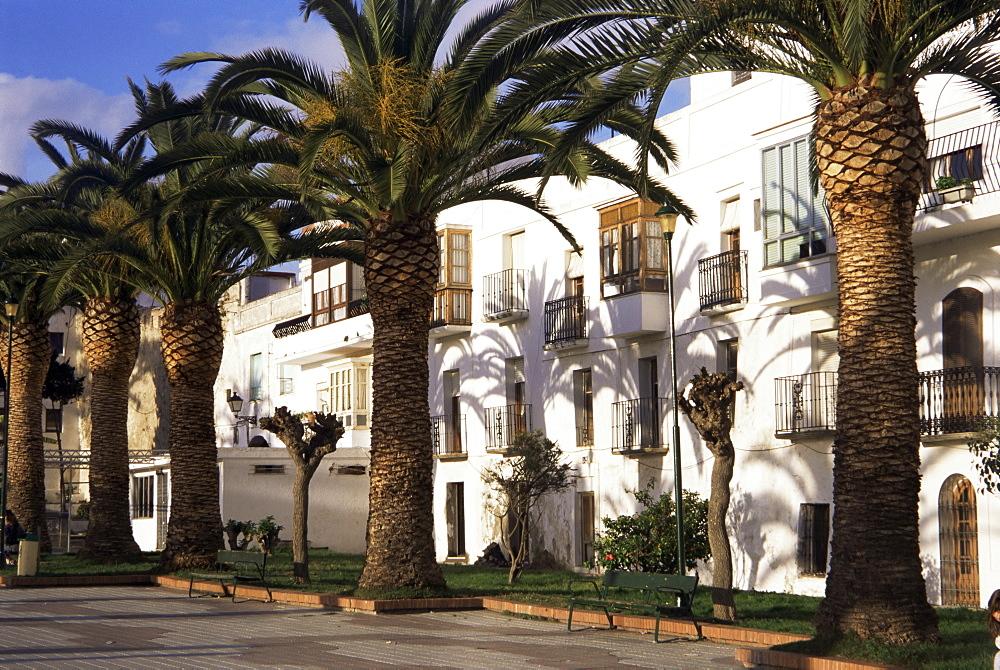 Spanish architecture and palm trees, Tarifa, Andalucia, Spain, Europe