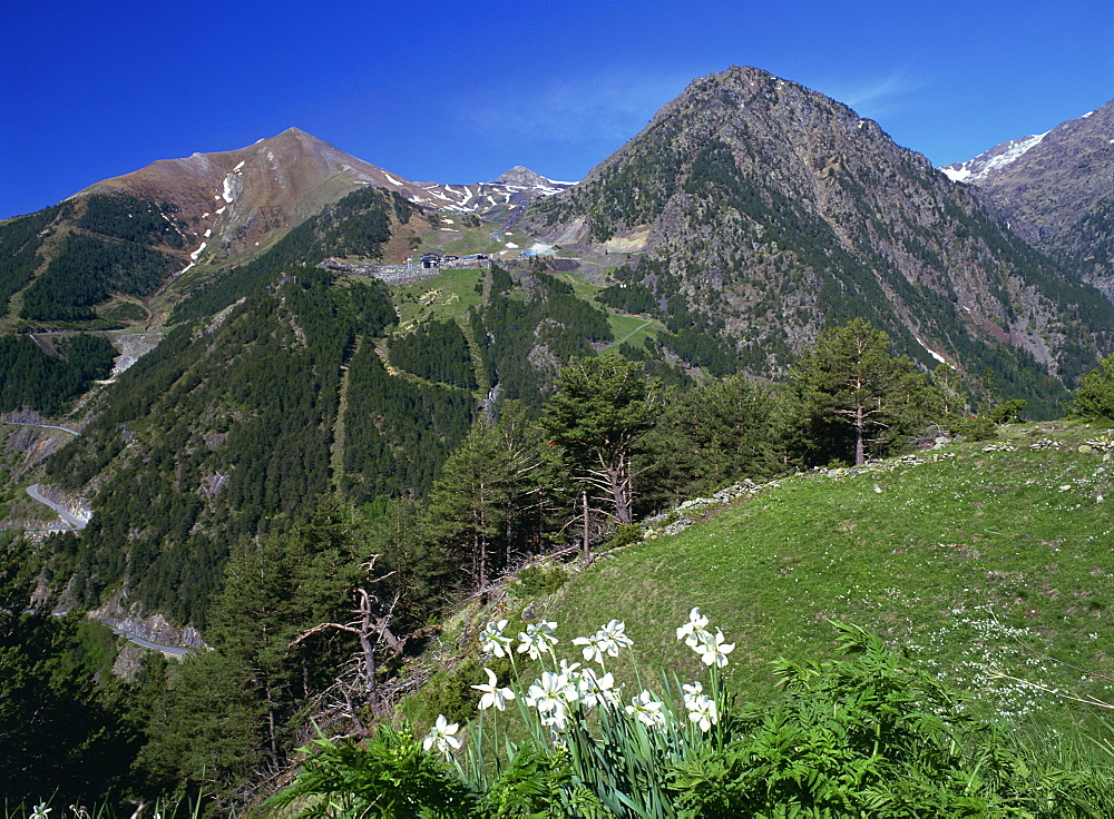 Poets narcissus (Narcissus poeticus) and view west across the Arinsal valley to the Arinsal ski station in early summer, Arinsal, Percanela, Andorra, Europe