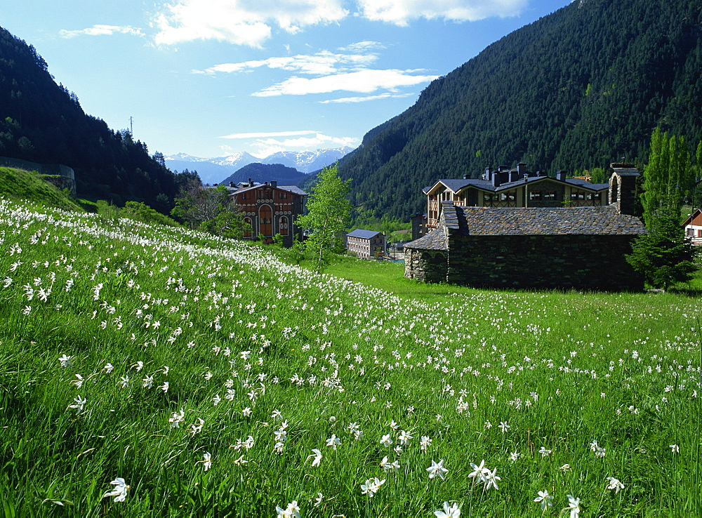 Poet's narcissus (Narcissus poeticus) and tiny old church above Arinsal village where Andorra's national flower grows in profusion, Arinsal, Andorra, Pyrenees, Europe - 586-1127