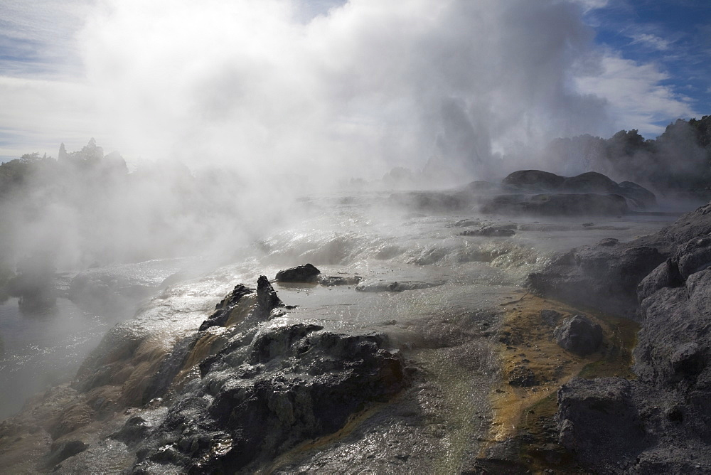 Pohutu geyser erupting steaming water from sulphurous mud and rock in Te Puia, Whakarewarewa Thermal Reserve in geothermal valley, Rotorua, North Island, New Zealand, Pacific - 586-1463