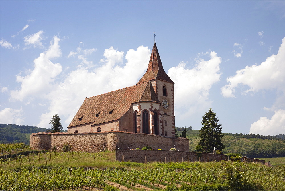 The 15th century fortified church of St. Jacques and Grand Cru vineyards on the Alsation wine route, Hunawihr, Alsace, Haut-Rhin, France, Europe - 586-1490