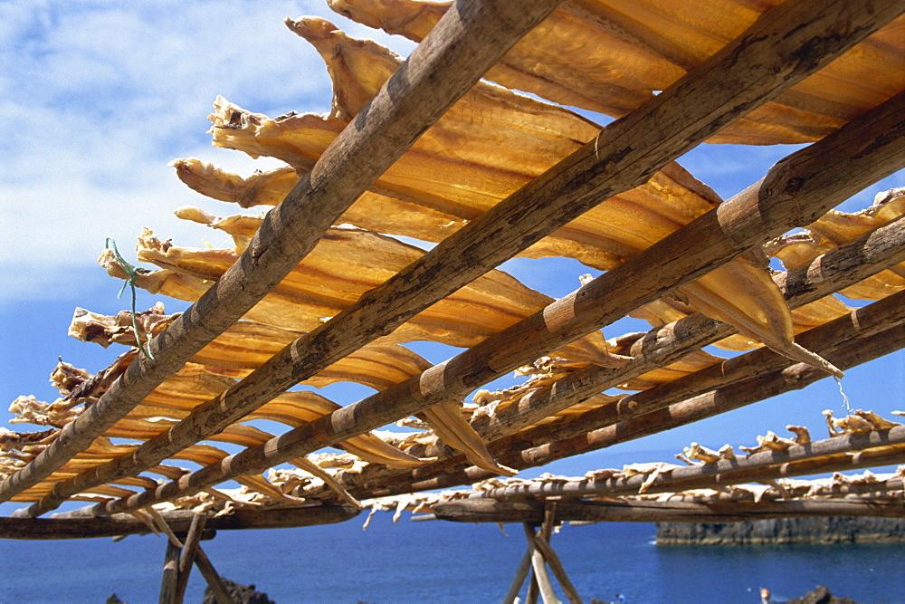 Cod drying, Camara de Lobos, Madeira, Portugal, Atlantic, Europe - 59-3479