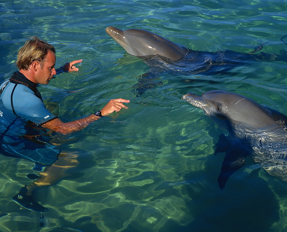 Swimming with the dolphins, Sea World, Surfers Paradise, Queensland, Australia, Pacific - 614-508
