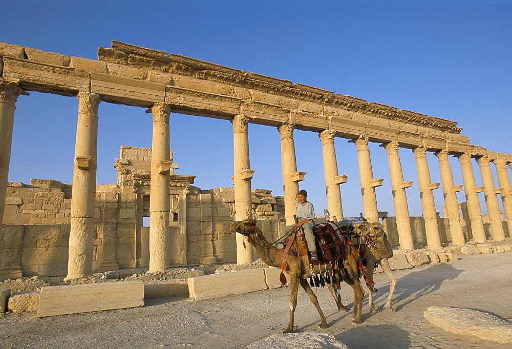 Boy on camel in front of the great colonnade, Palmyra, UNESCO World Heritage Site, Syria, Middle East