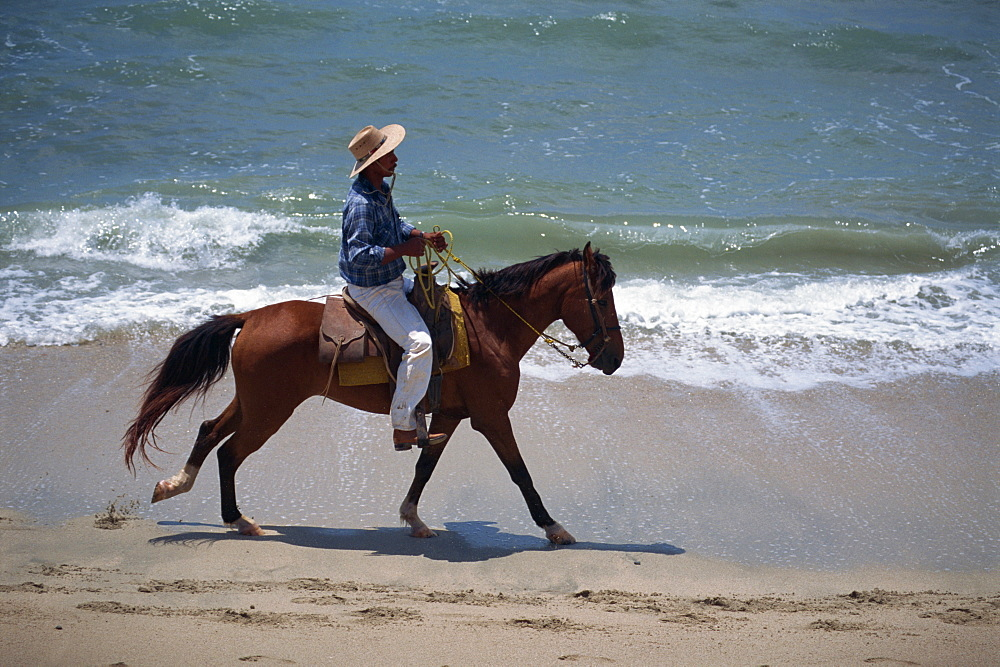 Side view of a man on a horse riding along a beach at the water's edge, Bucerias, Mexico, North America