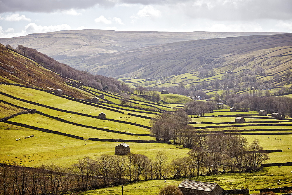 Swaledale, North Yorkshire, Yorkshire, England, United Kingdom, Europe - 627-1331