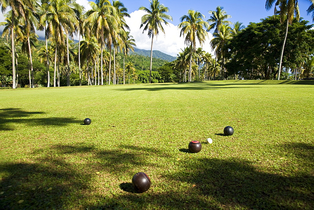 High Quality Stock Photos Of Coconut Plantation