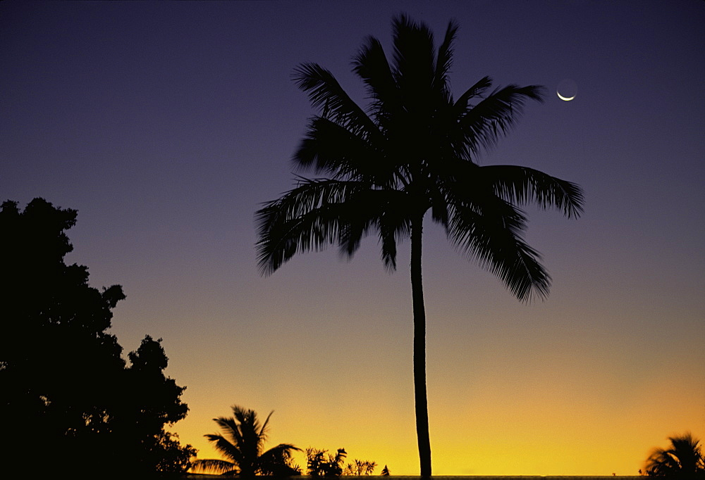 Sunset Coconut Palm Tree