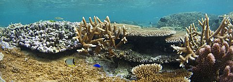 Scuba diving, Fiji, Pacific