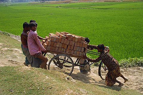 A group of young men pulling a cycle rickshaw loaded with bricks up a slope out of a rice field in Bangladesh, Asia