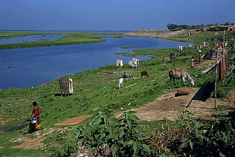 Latrines on the river bank in rough land grazed by cows in a slum in Dhaka, Bangladesh, Asia