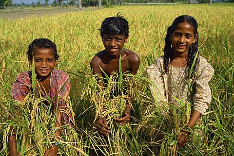 Children in rice field, Char Kukri Mukri, Bangladesh, Asia