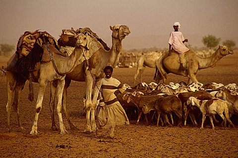 People and livestock during famine in 1997, Darfur, Sudan, Africa - 640-793