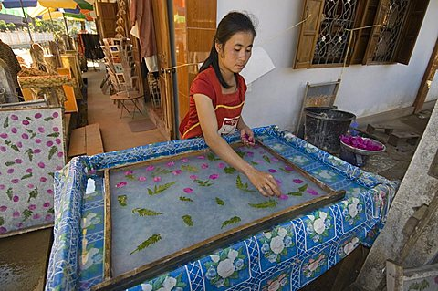 Making paper in village near Luang Prabang, Laos, Indochina, Southeast Asia, Asia