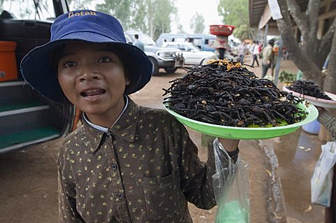 Cooked spiders for eating in market, Cambodia, Indochina, Southeast Asia, Asia