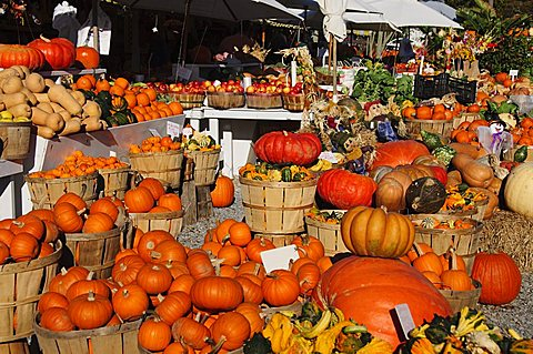 Pumpkins, The Hamptons, Long Island, New York State, United States of America, North America