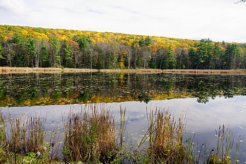 Lake near Great Barrington, The Berkshires, Massachusetts, New England, United States of America, North America