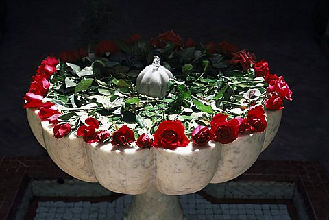 Roses, Villa des Oranjes, small hotel, Marrakech, Morocco, North Africa, Africa - 641-4214
