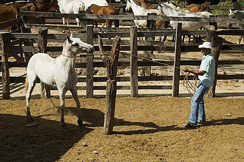 Horses, Hacienda Guachipelin, near Rincon de la Vieja National Park, Guanacaste, Costa Rica, Central America