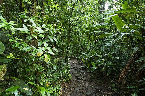Vegetation in the rain forest, Tortuguero National Park, Costa Rica, Central America