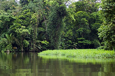 On the back waters at Tortuguero, Costa Rica, Central America