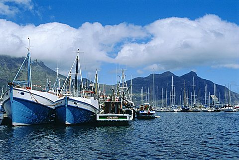 Hout Bay, fishing harbour, near Cape Town, South Africa - 645-3087