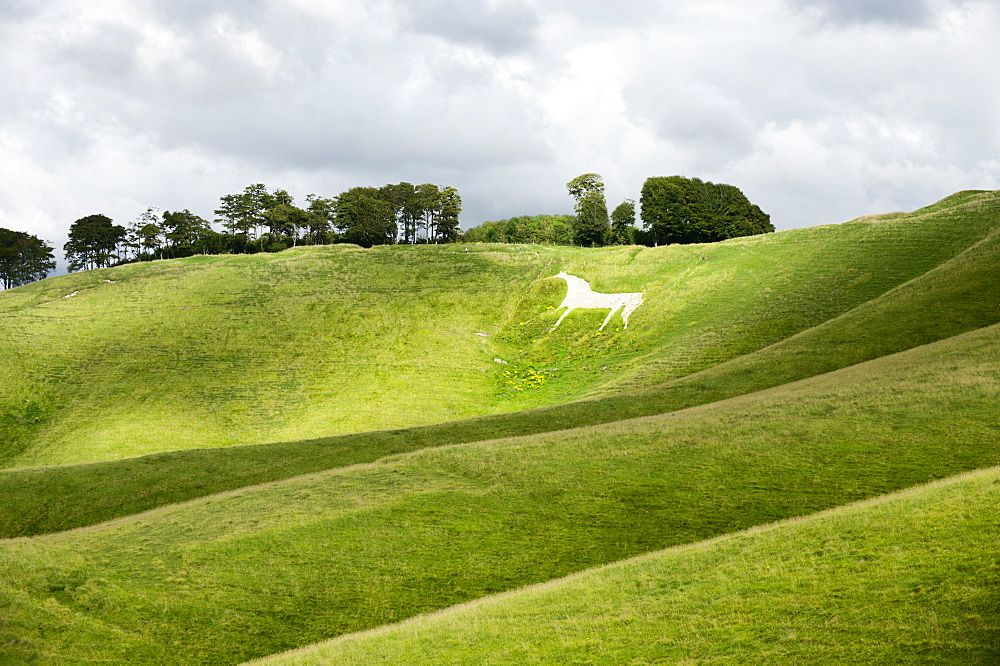 White horse, the Cherhill Downs, Wiltshire, England, United Kingdom, Europe