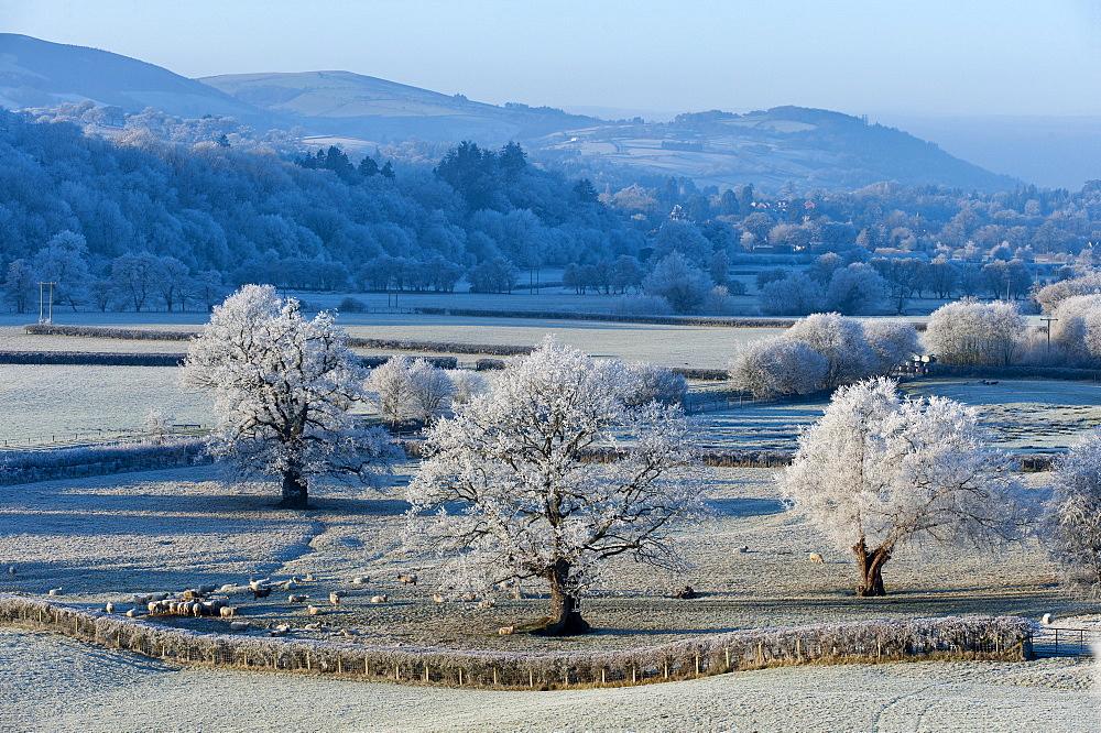 Frosty landscape, Powys, Wales, UK. - 663-877