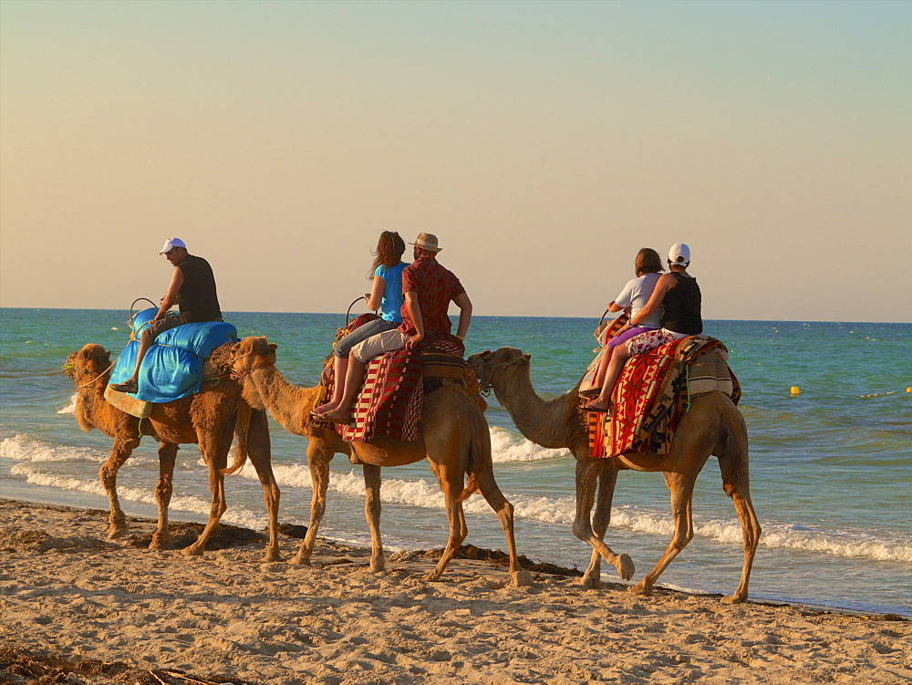 Tourists riding camels on the beach, at sunset, Djerba, Tunisia, North Africa, Africa