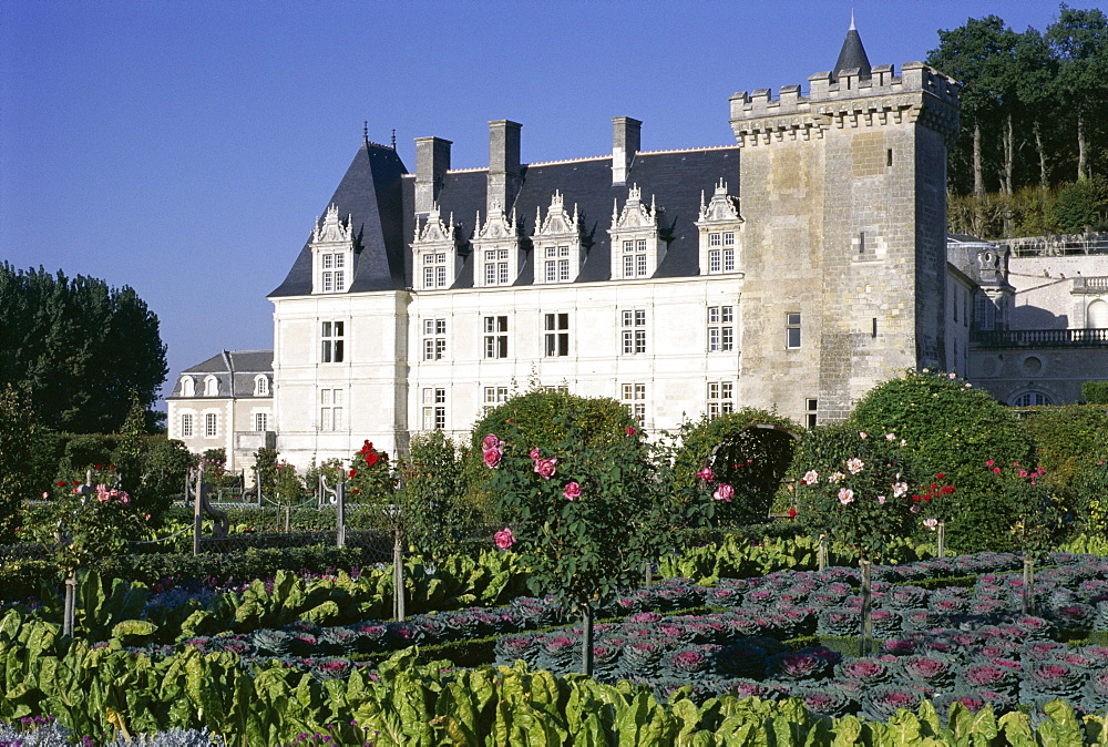 Chateau and gardens including vegetables in potager, Chateau de Villandry, UNESCO World Heritage Site, Loire Valley, Centre, France, Europe