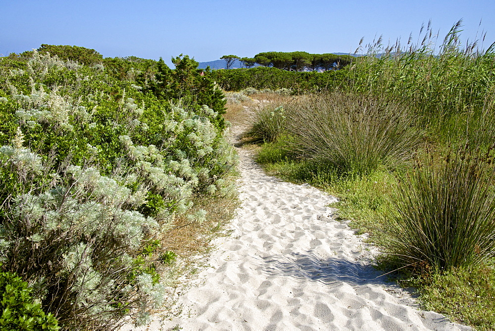 Sandy path to the beach, scrub plants and pine trees in the background, Costa degli Oleandri, near Ottiolu harbour, Sardinia, Italy, Mediterranean, Europe - 665-5467
