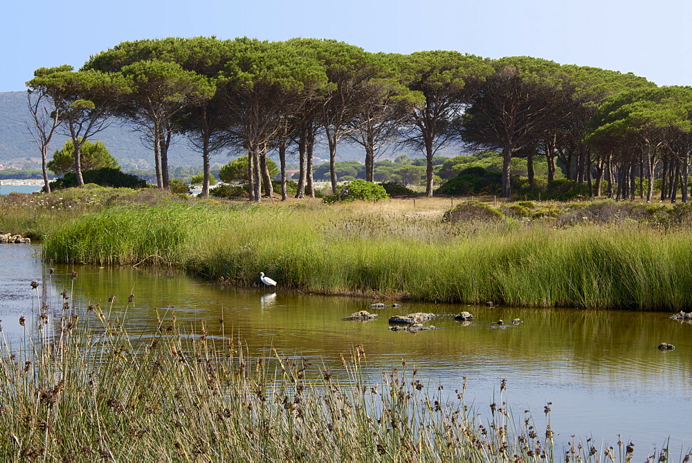 Lake with water plants and bird, sea and beach in the background, Costa degli Oleandri, near Ottiolu harbour, Sardinia, Italy, Mediterranean, Europe - 665-5468