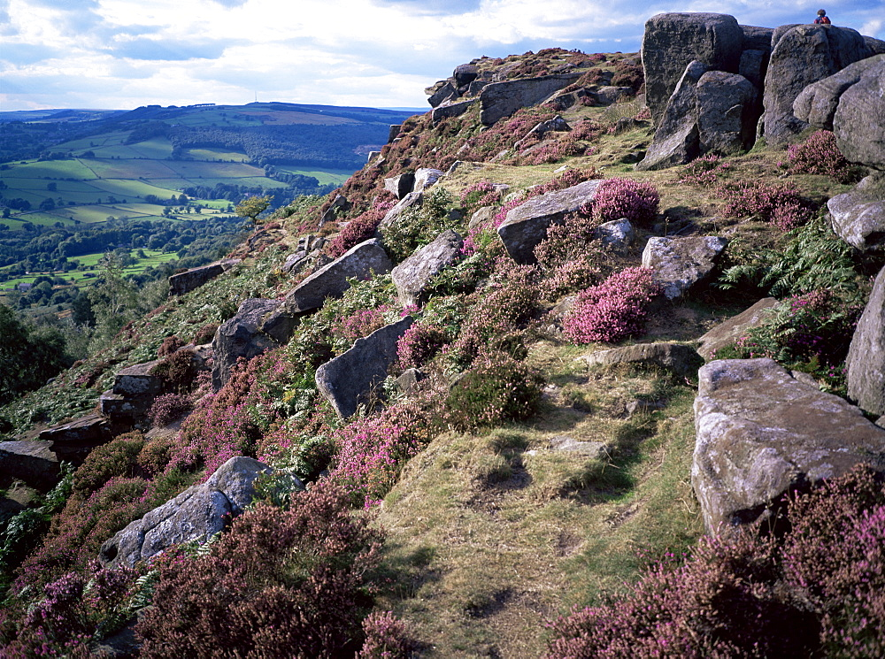 Heather and rocky terrain, Froggatt Edge, Derbyshire, England, United Kingdom, Europe