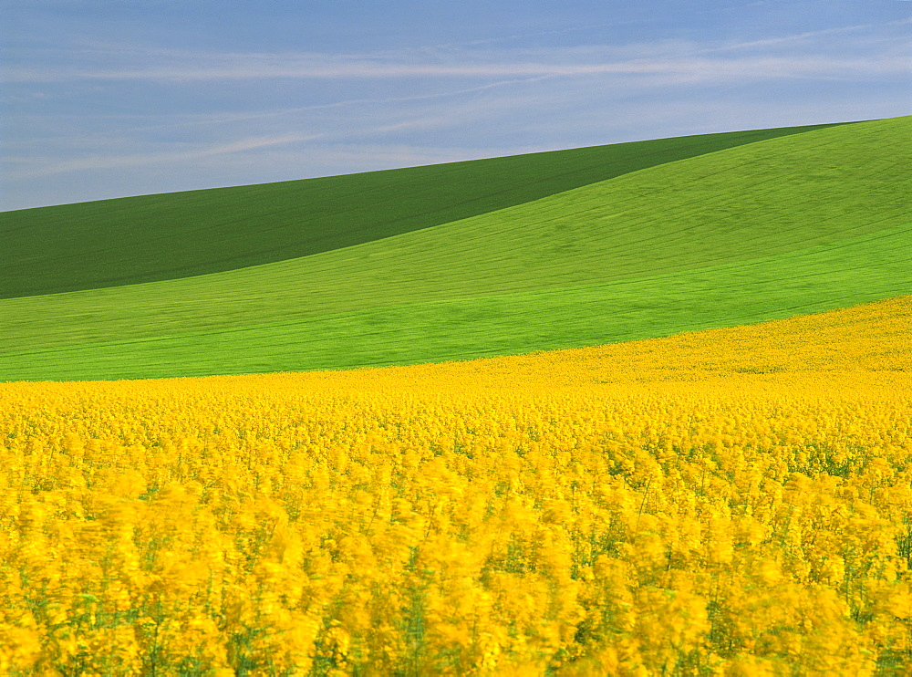 Patterned green and yellow agricultural landscape in spring with oil seed rape field in flower near Marcilly le Hayer, Aube, France, Europe - 681-1020