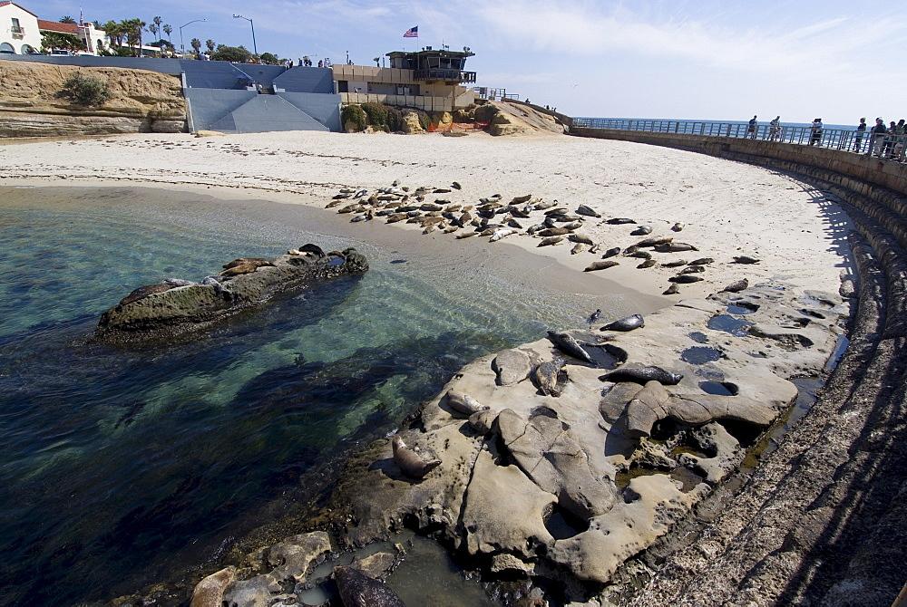 Child's Beach with harbor seals, La Jolla, near San Diego, California, United States of America, North America