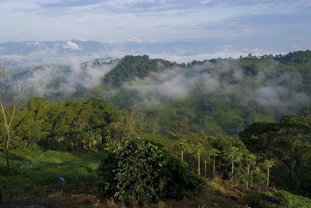 El Caney Plantation and view over coffee crops towards the Andes Mountains, near Manizales, Colombia, South America