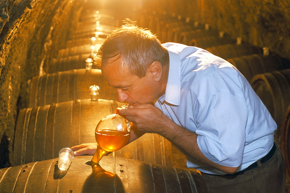 Taking a sample from cask in cellar, Budapest, Hungary, Europe