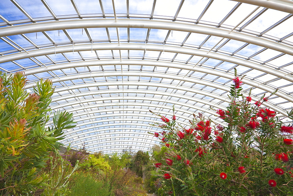 National Botanic Garden of Wales, Llanarthne, Carmarthenshire, Wales, United Kingdom, Europe
