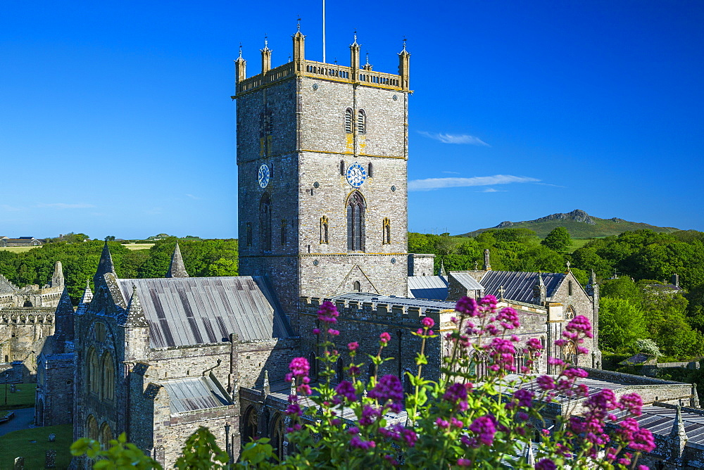 St. Davids Cathedral, Pembrokeshire, Wales, United Kingdom, Europe - 696-783