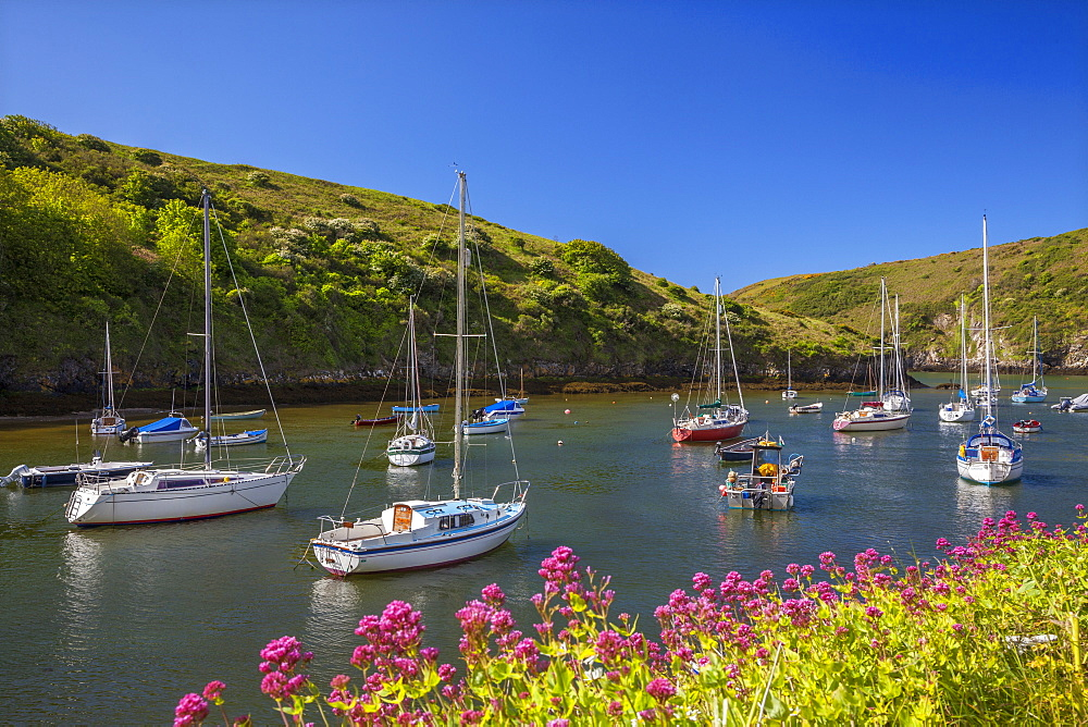 Solva Harbour, Pembrokeshire, Wales, United Kingdom, Europe - 696-785
