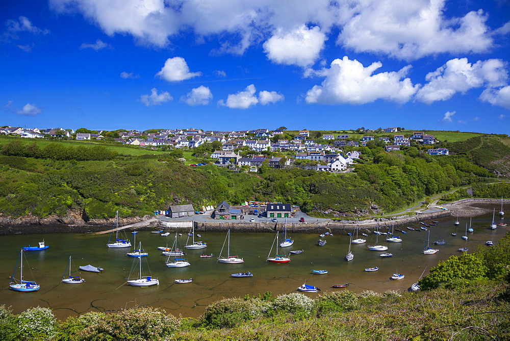 Solva Harbour, Pembrokeshire, Wales, United Kingdom, Europe - 696-786