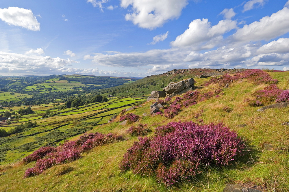 Heather moorland, Baslow Edge near Curbar, Peak District National Park, Derbyshire, England, United Kingdom, Europe