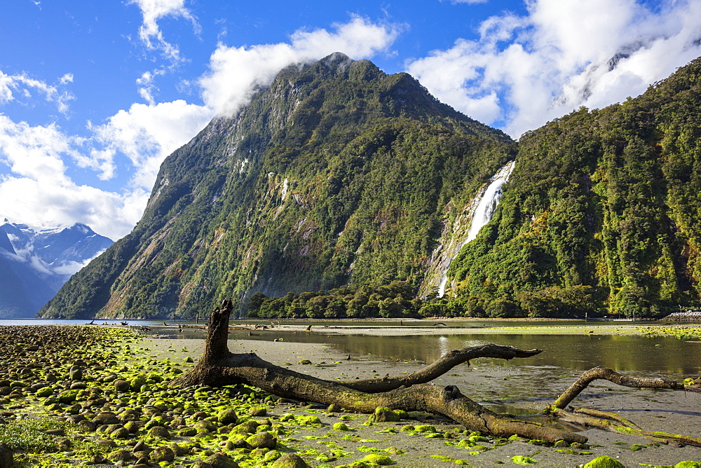 Dead tree, Cascade Range and Bowen Falls, Milford Sound, Fiordland National Park, UNESCO World Heritage Site, South Island, New Zealand, Pacific