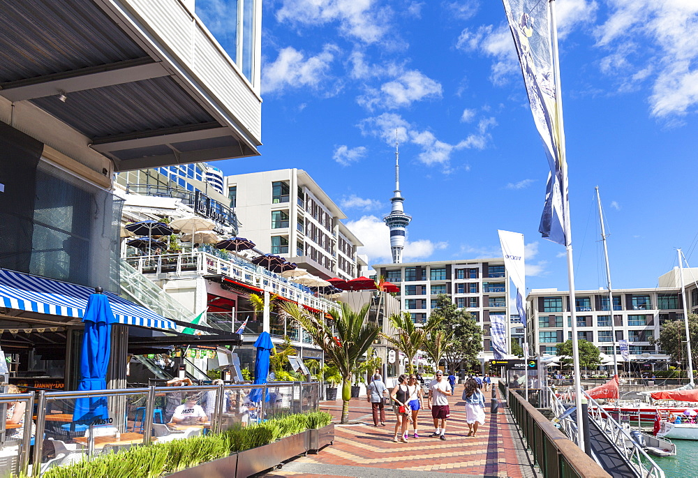 Restaurants and bars in waterfront area, Viaduct Harbour, Auckland, North Island, New Zealand, Pacific - 698-3351