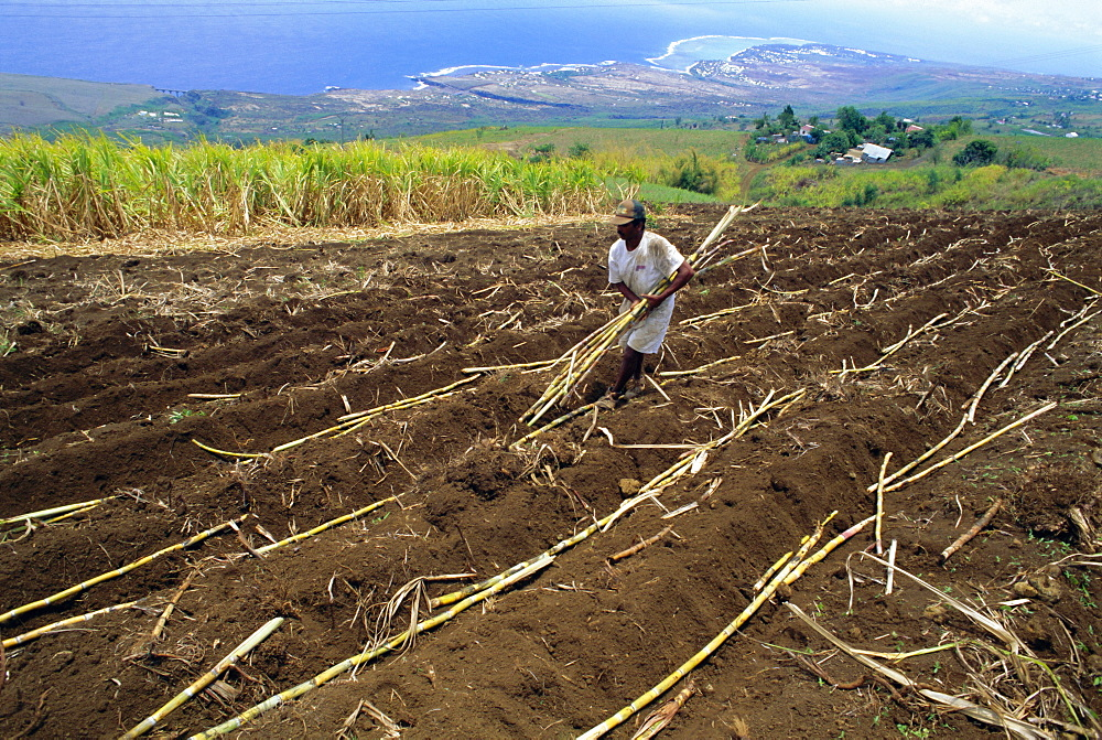 Sugar cane fields, Reunion Island, Indian Ocean