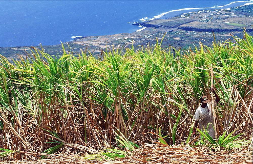 Sugar cane plantation, StGilles, Reunion Island, Africa