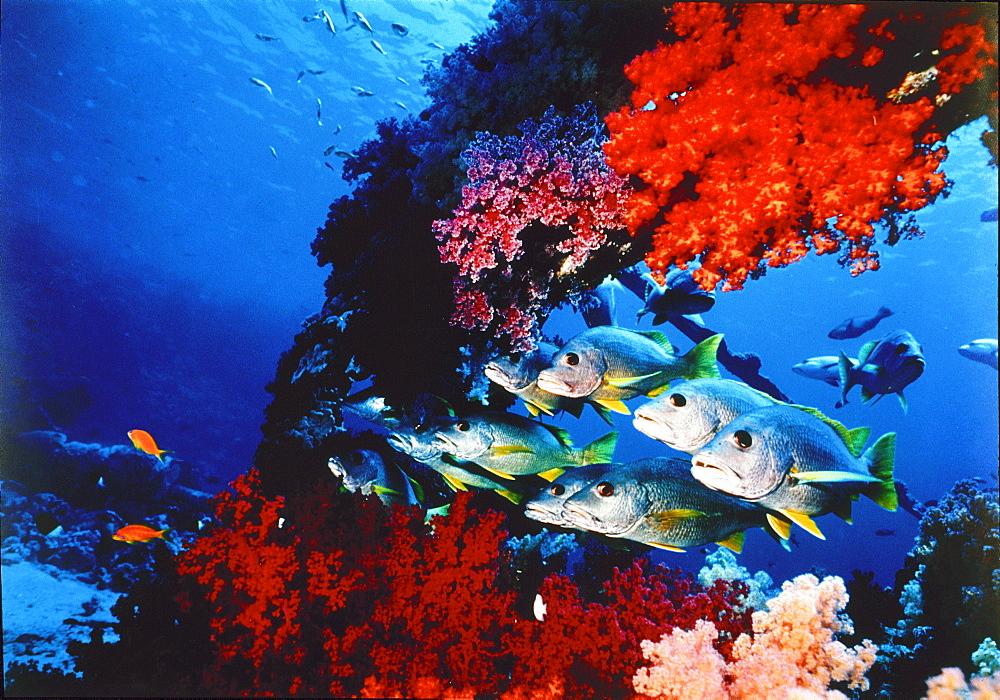 Submarine landscape, Red Sea