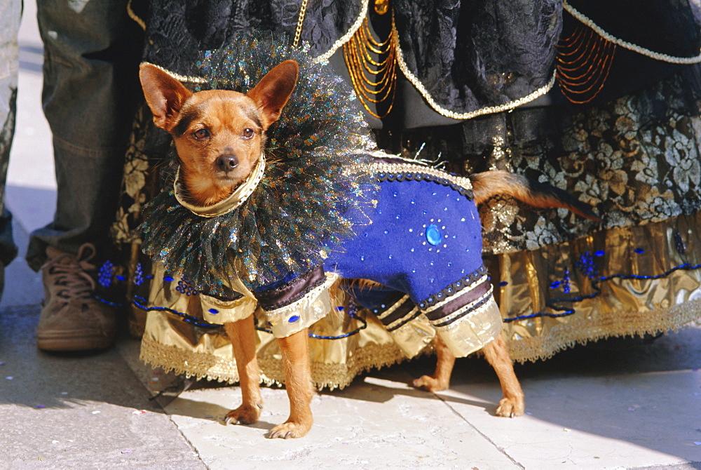 Small dog in carnival costume, Venice Carnival, Venice, Veneto, Italy - 712-1182